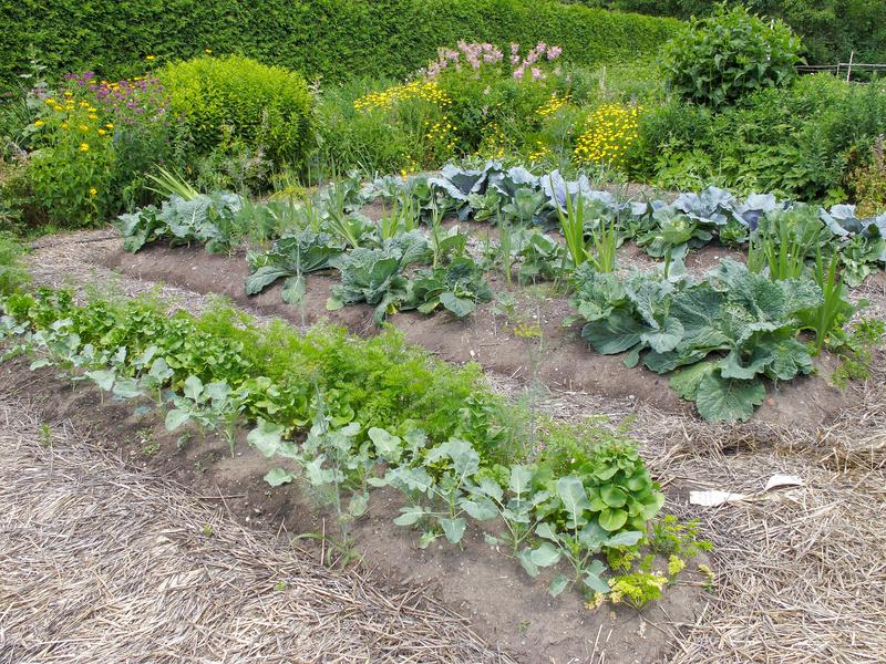 Garden of veg