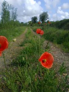 Slane-July-2011-014-225x300